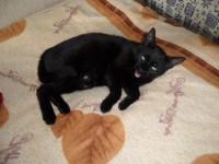 Ha túl korán ébresztem a macskám :)