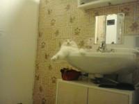 Macskajajos ébredés