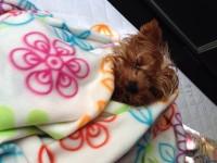 Rommel ébredezik ;)