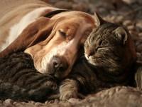 Cicás párna vagy kutyás takaró ?