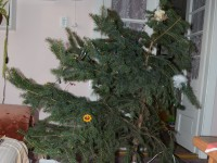 A leggörbébb karácsonyfa :D