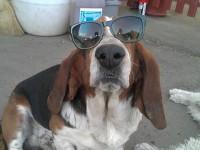 Bobóka, a kutyám aki lazának érzi magát :D