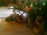 Kisebbik fiam első karácsonyfája!