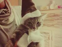 Pizsi is már karácsonyi hangulatban van:)