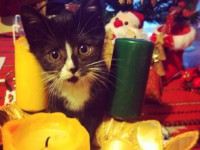 Karácsonyi macsek : )