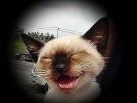 Apró örömök sokasága teszi a boldogságot.