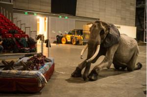 elefant.mno_