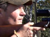 Stohl vadászata