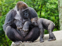 Így segíthetsz: add le a régi mobilodat az állatkertben!