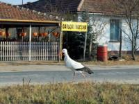 Matyi a gólya
