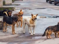 Kóbor kutyák tartják rettegésben Kazincbarcikát
